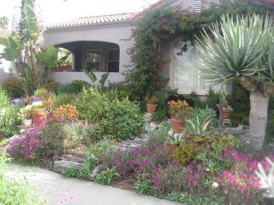 California Native Plant Garden Design native california plants drought tolerant ff32e6b7f02ae9f473a8739fa1557e California Native Plant Myths 2014 Notes