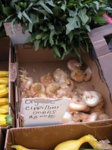 cippollini onions